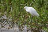 Voyages et Oiseaux - Travel and Birds