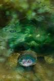Algae Covered Old Snapper
