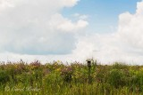 Seneca Meadows Flowers