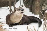I Otter Be Up