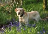 Fudge- A  Dog's Tale