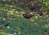 A Pheasant New Year