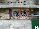 Bee boxes and the insect hotel at the FWG