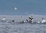 When Gulls, Dolphins and Fish Converge