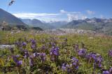 Veldgentiaan, 2300 mtr.