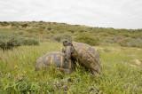 Landschildpadden zojuist ontwaakt