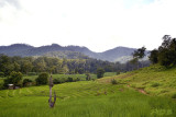 Pai former forest