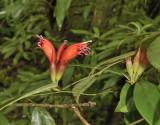 Parasiet op oude Rhododendron en eik
