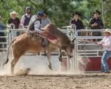 bull-ride_Q4I1321.jpg