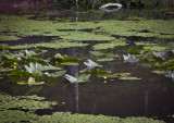 Spring Reflections On Pandapas Pond