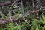 High Mountain Rain Forest