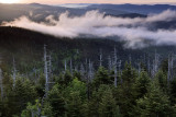 Early Morning On Clingmans Dome