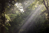 Light Rays