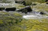 Laurel Creek Golden Reflections