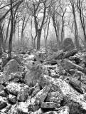 Mountain Woods: Virginia