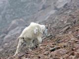 A Difficult Climb-Mt. Evans