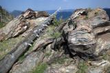 Weathered Rock And Wood-RMNP