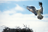 Returning To The Nest- Arapaho National Forest