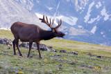 Call Of The Wild- RMNP