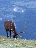 Grazing The High Country