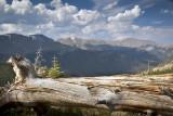 Fallen Tree Trunk-RMNP