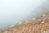 Climbing Single File-Mt. Evans