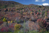 Fall Color At Graveyard Fields