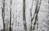 Mountain Lake Ice Storm
