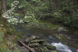 Spring 2014 And Summer 2013 In Smoky Mountain National Park