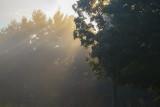 Sun Rays And Fog