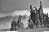 An Olympic National Park April Snow-Washington State