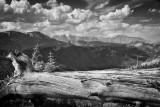 Old Tree Trunk-Rocky Mountain National Park-Colorado