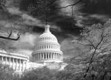 The Capitol Building-Washington DC