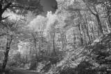 Road Through Pisgah National Forest-North Carolina