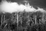 Low Clouds On The Smoky Mountains