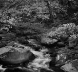 Oconaluftee River In The Smoky Mountains, North Carolina