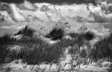 Sea Oates And Sand Dunes, North Carolina