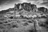 Lost Dutchman's Mine State Park, Arizona