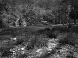 A Stream In Elkmont Campground, Great Smoky Mountains