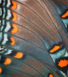 Butterfly Wings: Combining Two Images In Layers