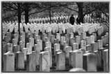 Hallowed Ground- Formations Of Stone, Arlington National Cemetery, Arlington, Virginia