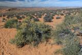 High Desert Surrounding Horseshoe Bend