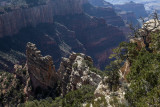 Afternoon Light Near Walhalla Overlook On The North Rim Of The Grand Canyon