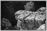 Grand Canyon North Rim-One Tough Tree