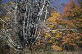 Blue Ridge Parkway Autumn Colors