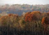 Autumn's Fading Colors