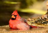 Splish splash I was takin a bath