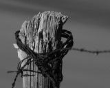 The fence post.