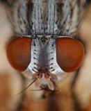 fly eyes.