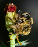 Chimney bees